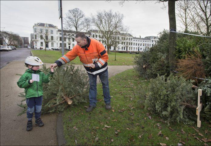 Kerstbomen inzamelactie Kenaupark. Fotografie: United Photos/Paul Vreeker.