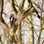 Arjan Dwarshuis over record van 6.841 vogelsoorten in zijn Big Year