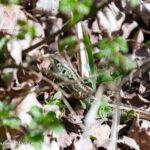 Kikkers en padden in actie op de buitenplaats Leyduin