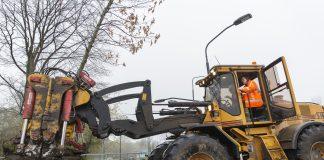 Wethouder Sikkema verplaatst boom van de Europaweg naar de Groningenlaan. Fotografie: Jurriaan Hoefsmit.