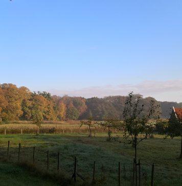 Wordt Leyduin uw nieuwe vrijwilligers werkplek? Foto: Landschap Noord-Holland.