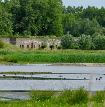 Het Landje van Gruijters met Fort benoorden Spaarndam. Fotografie: Johan Stuart.